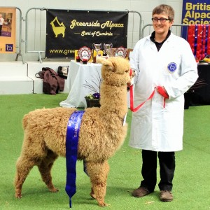 Eva, Reserve Champion at the NWAG Show Carlisle
