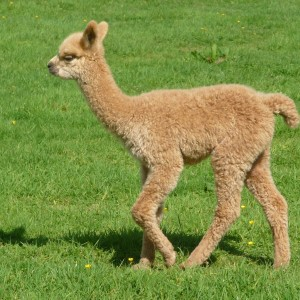 Eva as a Cria